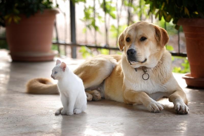 chien-et-chat-id556